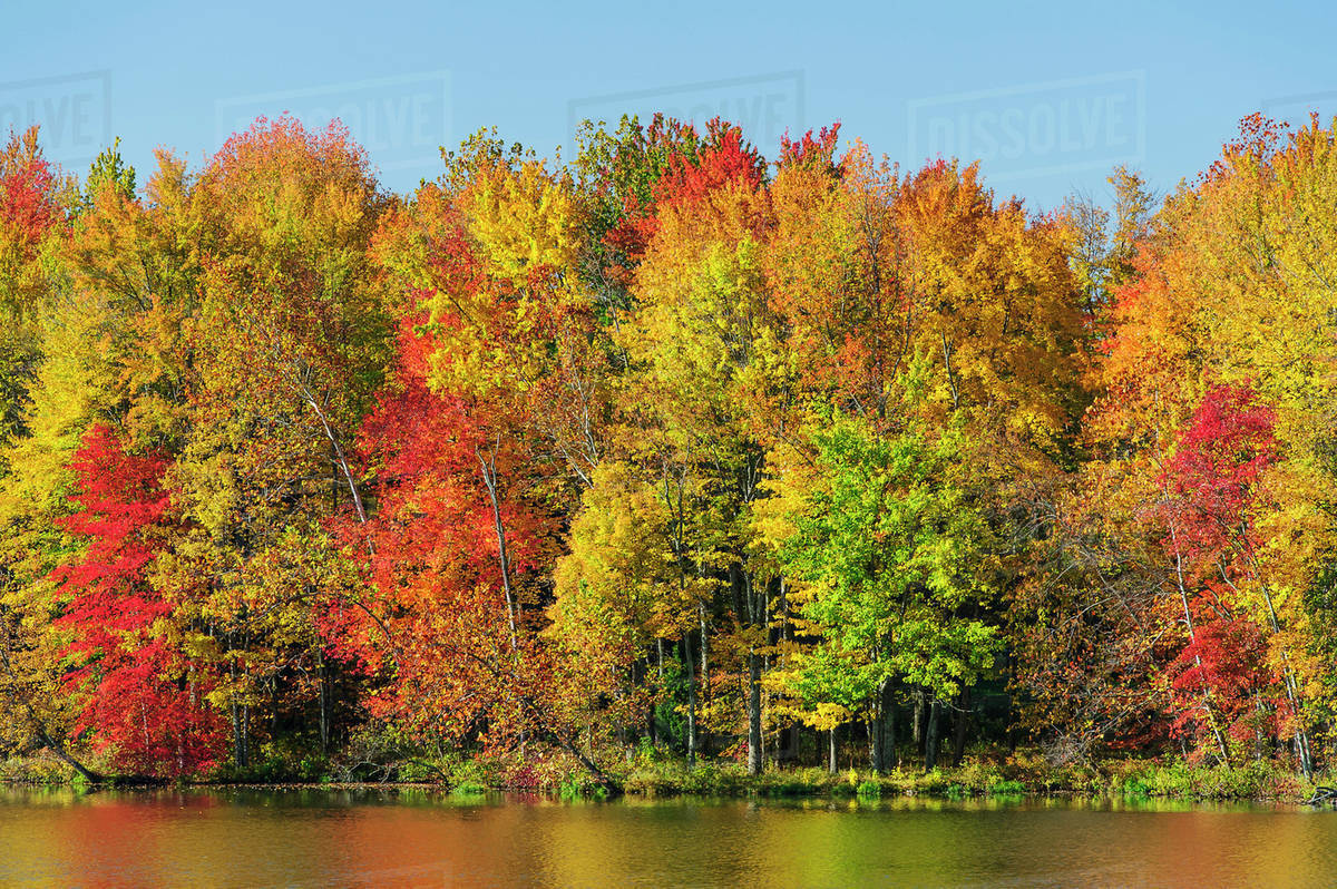 Trees In Autumn Colours Reflected In The Lake With A Blue Sky Ohio United States Of America Stock Photo Dissolve