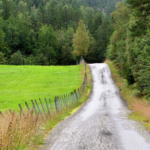 A Wet Road Leading Towards A Dense Forest; Norway Royalty-free stock photo