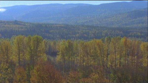 Wide-angle shot of a landscape at fall Royalty-free stock video