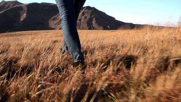 Follow shot steadicam of hiking woman feet in grassland national park Royalty-free stock video