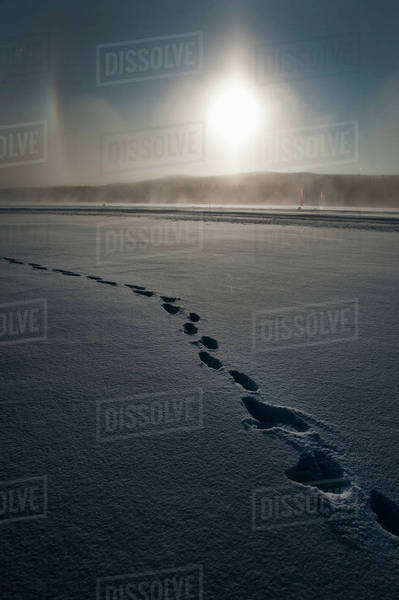 Footprints snow at dawn with sun in background Royalty-free stock photo