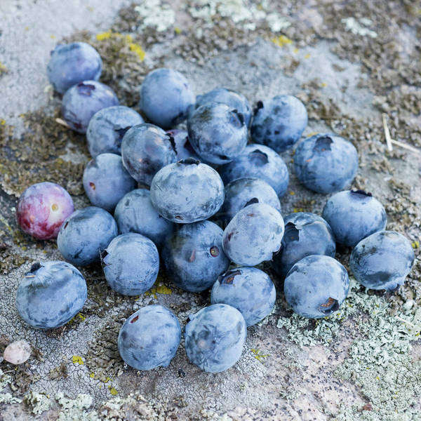 Group of blueberries on stone Royalty-free stock photo
