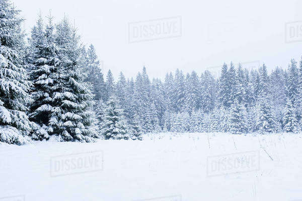 Snow covered trees and landscape against clear sky Royalty-free stock photo
