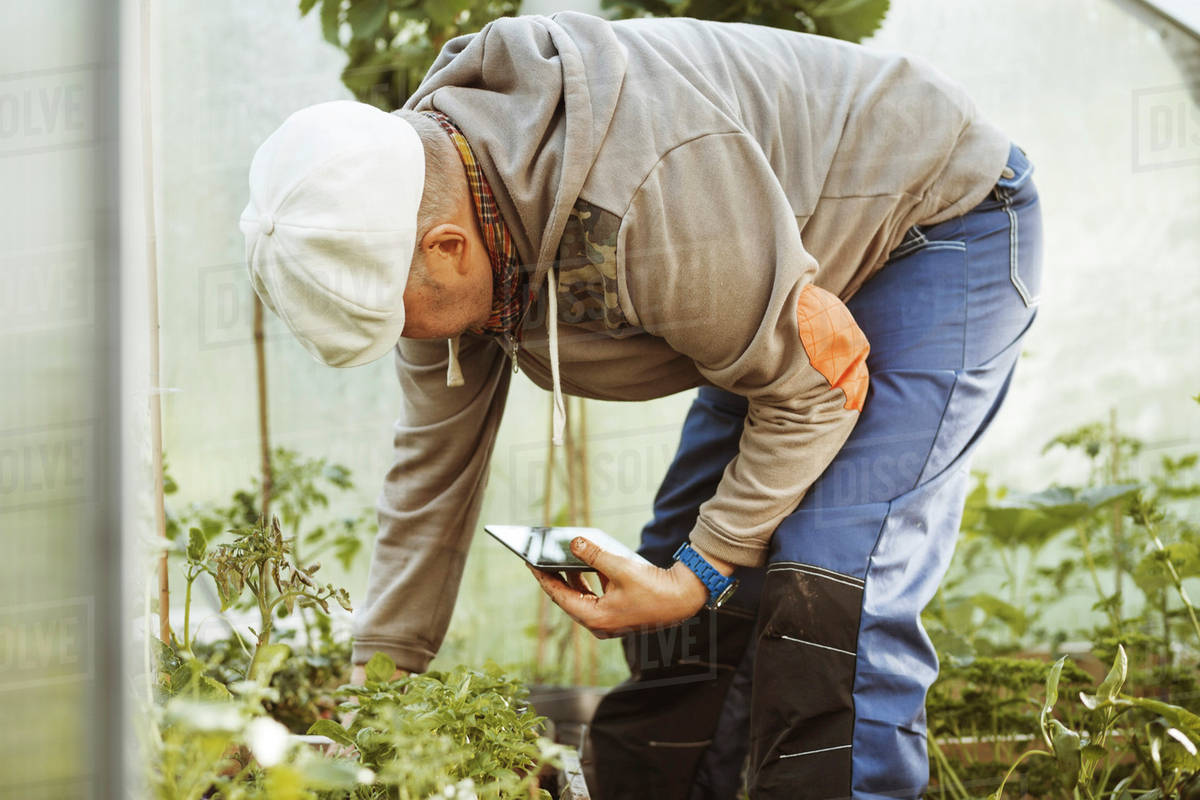 Mature gay man holding digital tablet while examining plants in ...