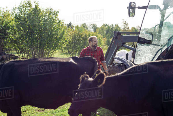 Farmer standing amidst cows by tractor at farm Royalty-free stock photo