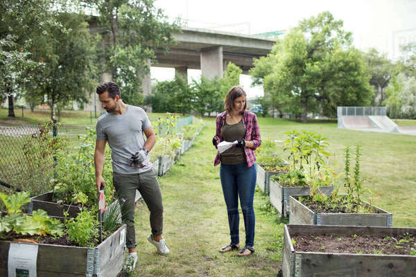 Full length of mid adult couple examining plants in urban garden Royalty-free stock photo