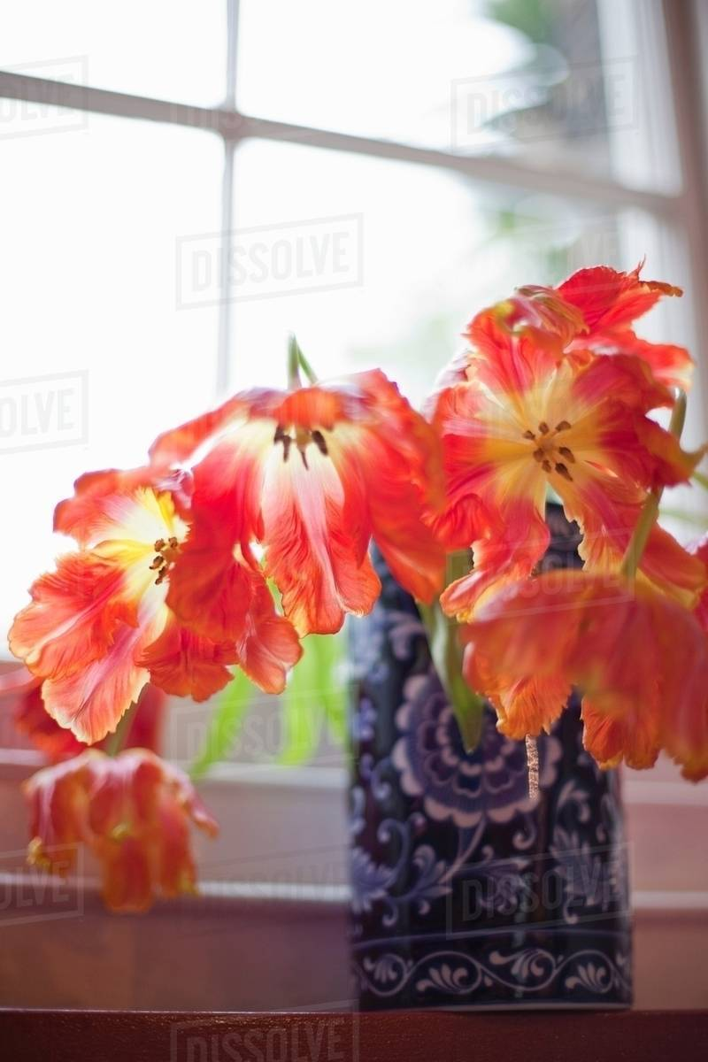 Dissolve & Flowers in vases and an English Garden stock photo