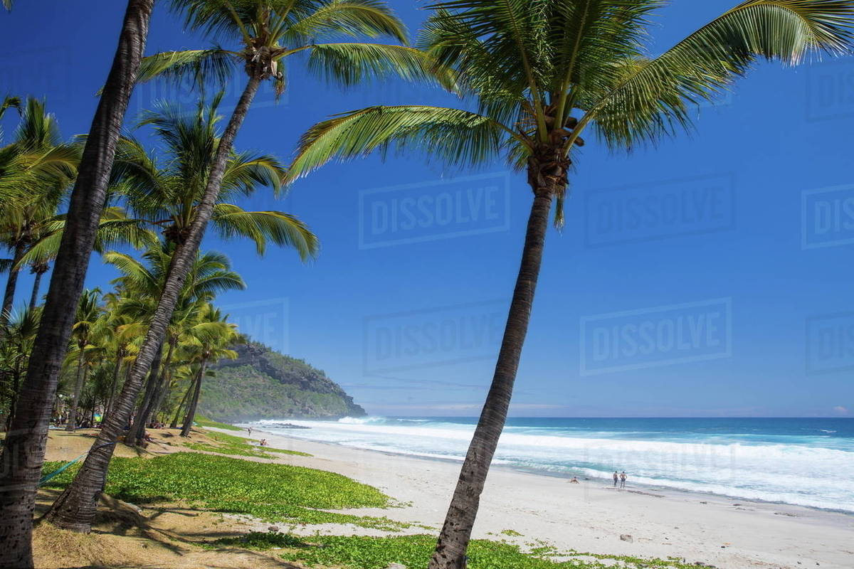 Beach Landscape With Palm Trees And Indian Ocean Reunion Island