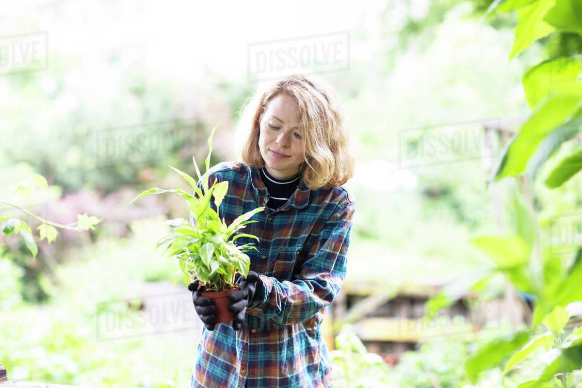 Mid adult woman preparing potted plant for her garden, brightly lit Royalty-free stock photo