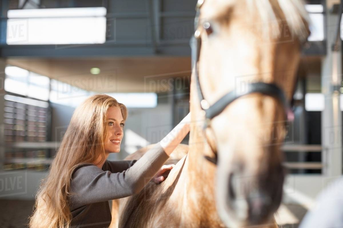 Young Female Stablehand Grooming Palomino Horse Stock Photo Dissolve