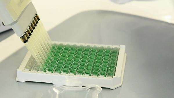 Close-up of lab technician injecting liquid into a microtiter plate; Full HD Photo jpeg Royalty-free stock video