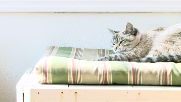 Tired tabby cat stretches and yawns on pillow. Royalty-free stock video