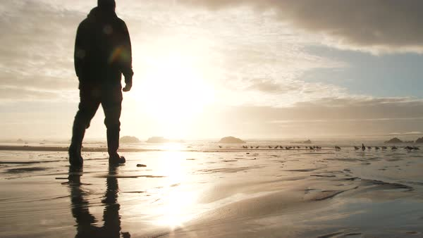 Man walks out on sandy beach to enjoy a beautiful sunset at the Oregon Coast with peaceful sound of waves crashing and birds calling. Royalty-free stock video