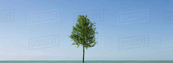 Solitary tree and blue sky Royalty-free stock photo