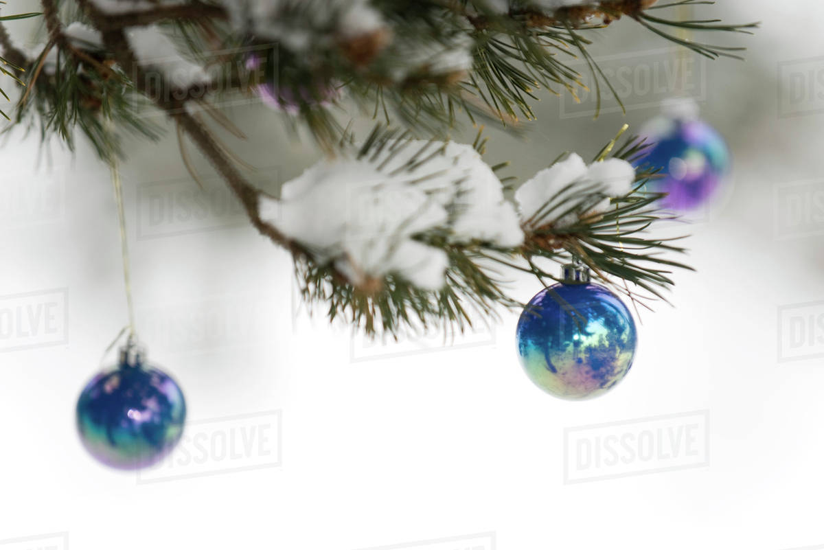 Christmas Ornaments Hanging From Tree Branch Dusted With Snow D984 45 957