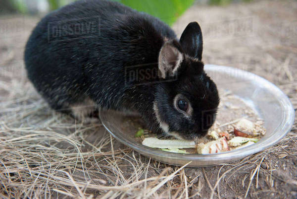 Rabbit eating food from bowl Royalty-free stock photo