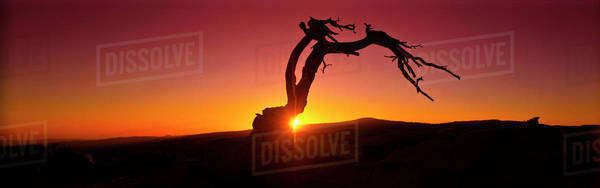 Silhouette of tree in desert landscape Royalty-free stock photo