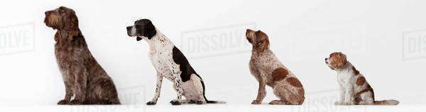 Dogs sitting in ascending order Royalty-free stock photo