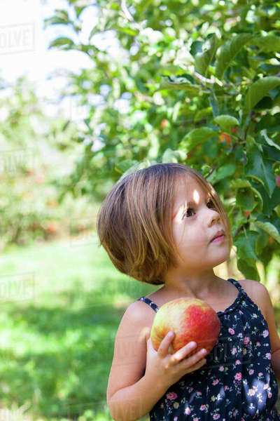 Curious girl picking apple in orchard Royalty-free stock photo