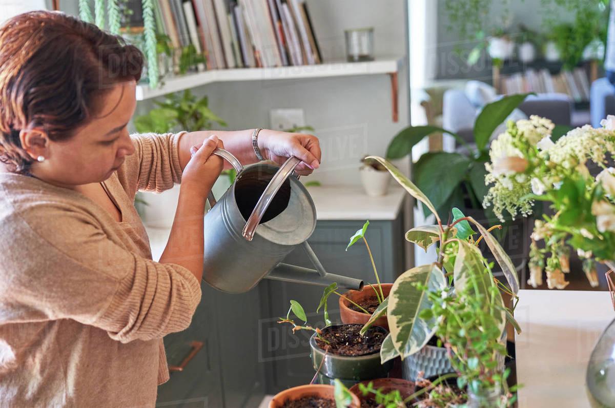 Mature woman watering houseplants Royalty-free stock photo