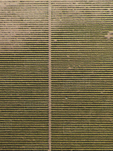 Full frame aerial view of crops in agricultural landscape Royalty-free stock photo