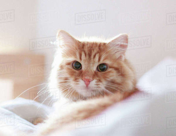 Close-up of cat relaxing at home Royalty-free stock photo