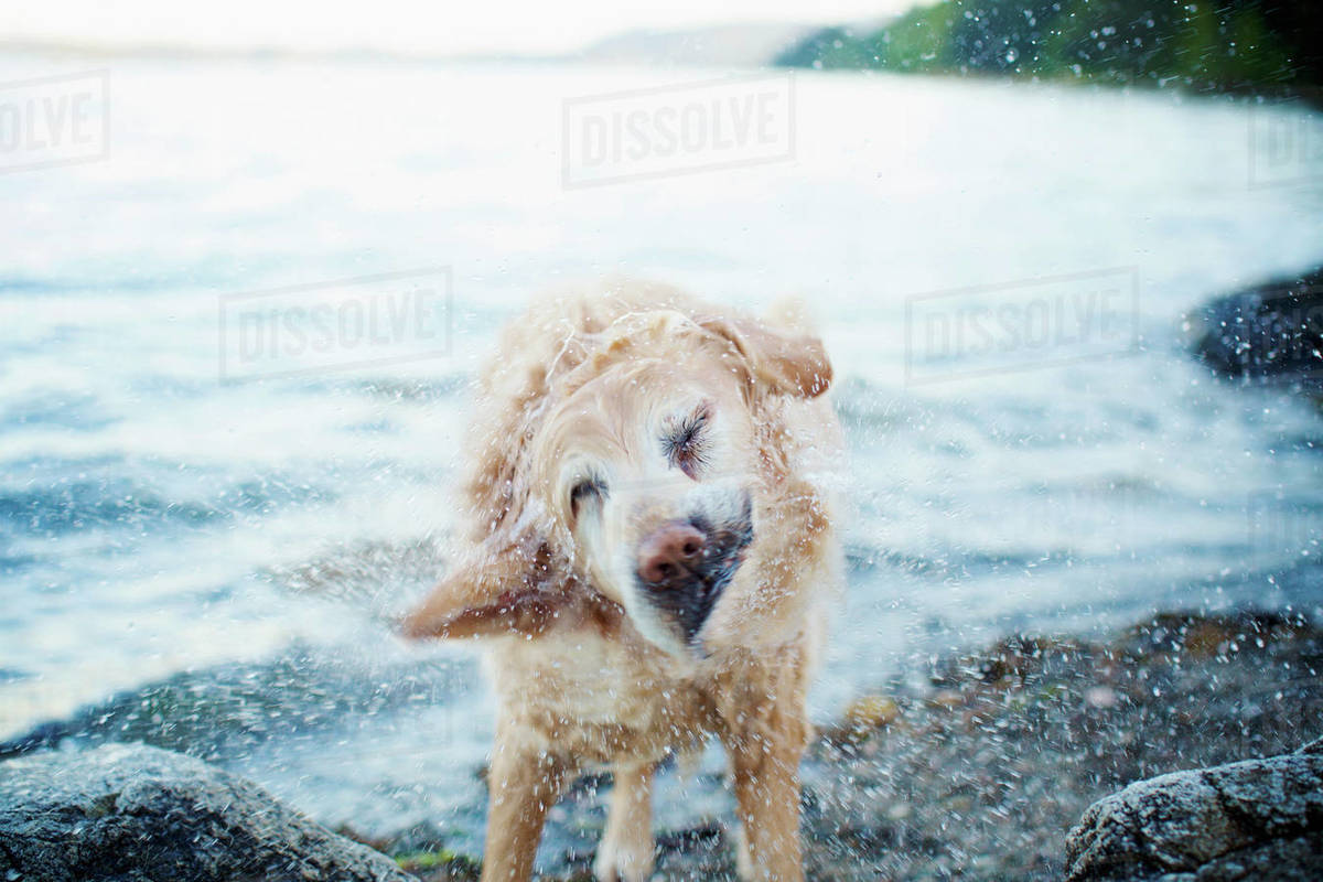 Wet dog shaking water off on beach Royalty-free stock photo
