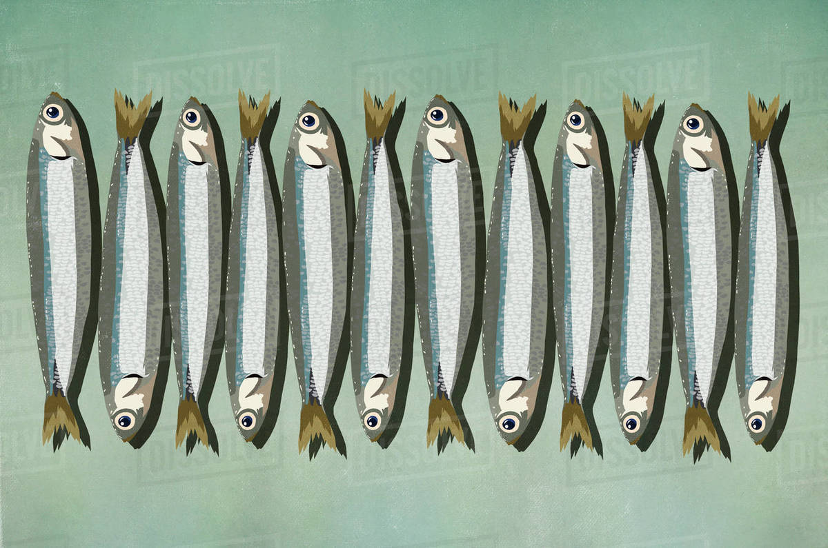 Sardines in a row Royalty-free stock photo