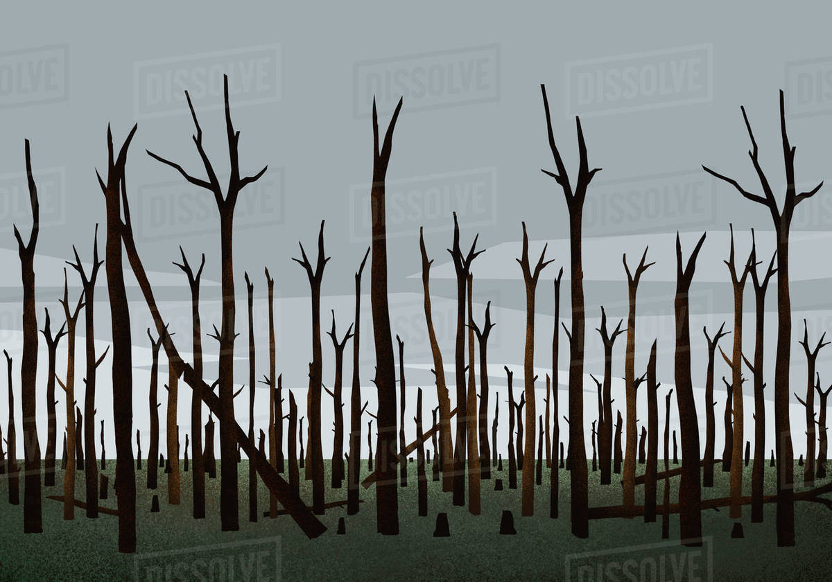 Burned trees in woods after forest fire Royalty-free stock photo