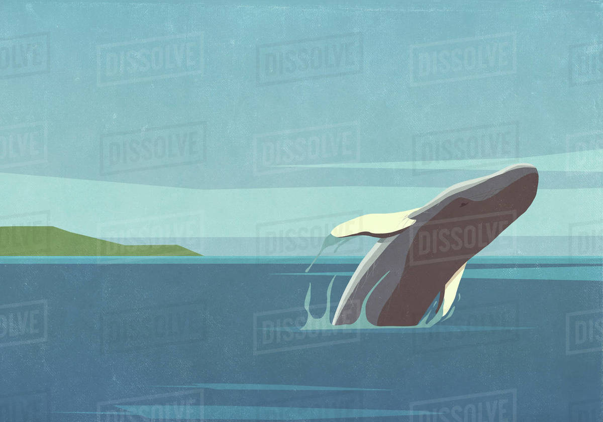 Whale breaching in ocean Royalty-free stock photo
