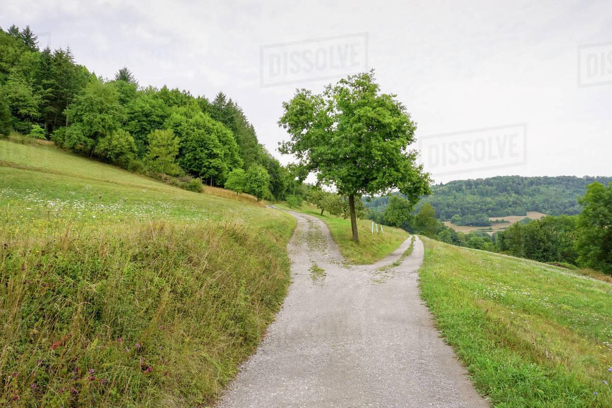Divided path on rural, green hillside, Unterregenbach, Hohenlohe, Germany Royalty-free stock photo